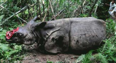 Rhinoceros - Top 10 animals being killed by poachers